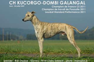 KUCORGO-DOMBI GALANGAL