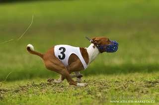 AMIGO KWAKU MAYBE DOG