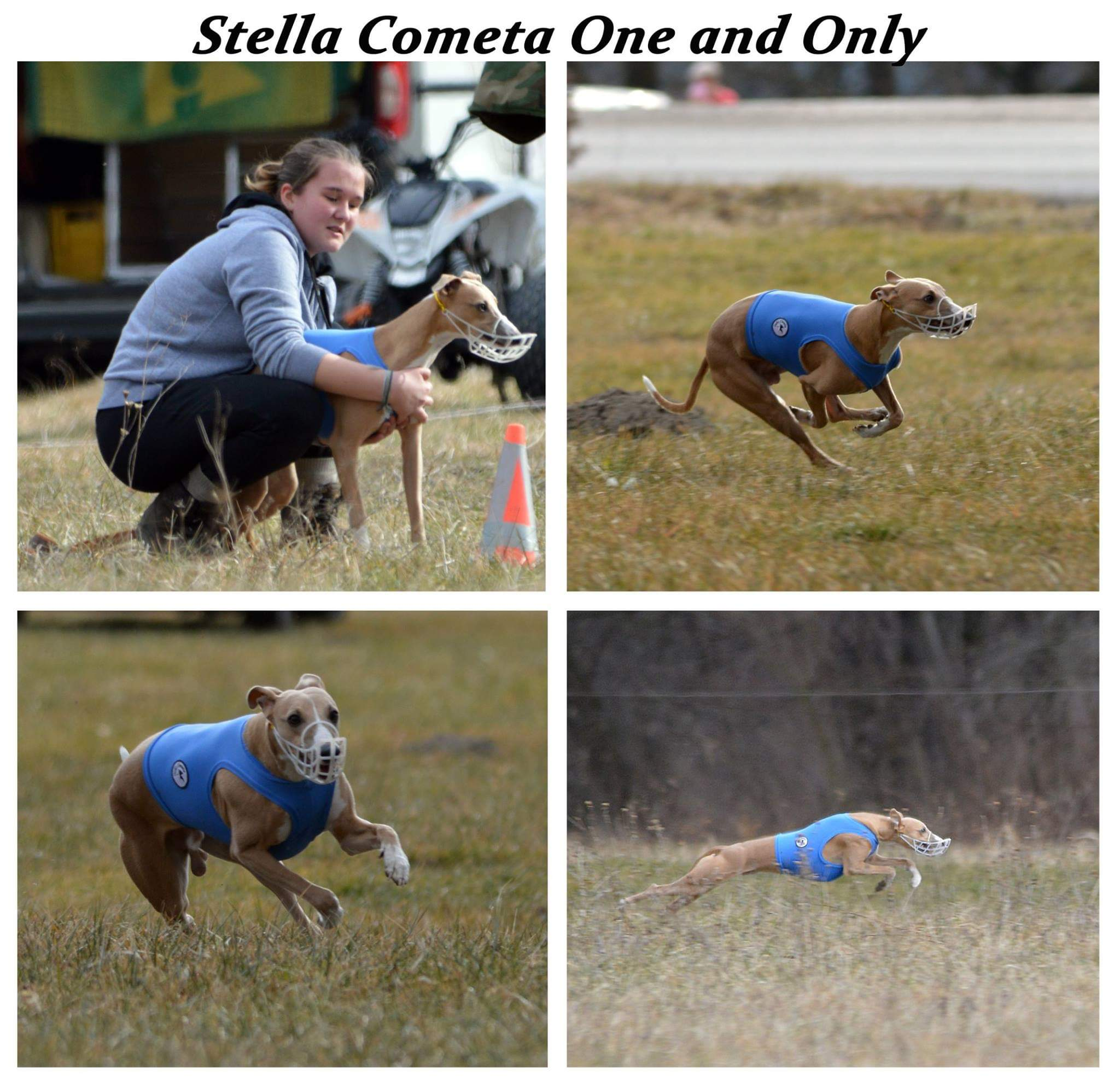 STELLA COMETA ONE AND ONLY